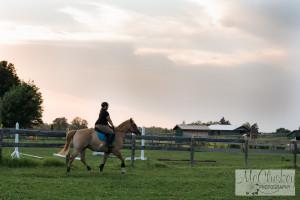 horse photographers