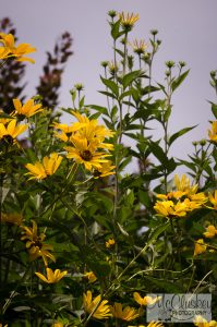 Innisfree Garden Millbrook NY